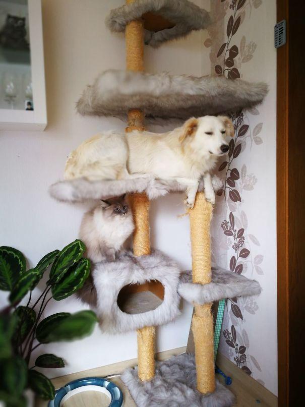 psy si myslia ze su macky (12)