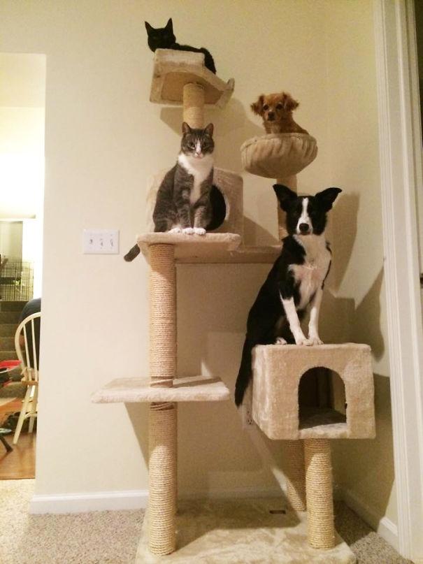 psy si myslia ze su macky (8)