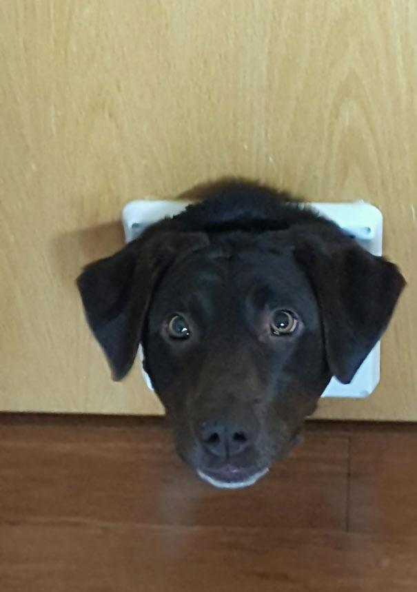 psy si myslia ze su macky (9)