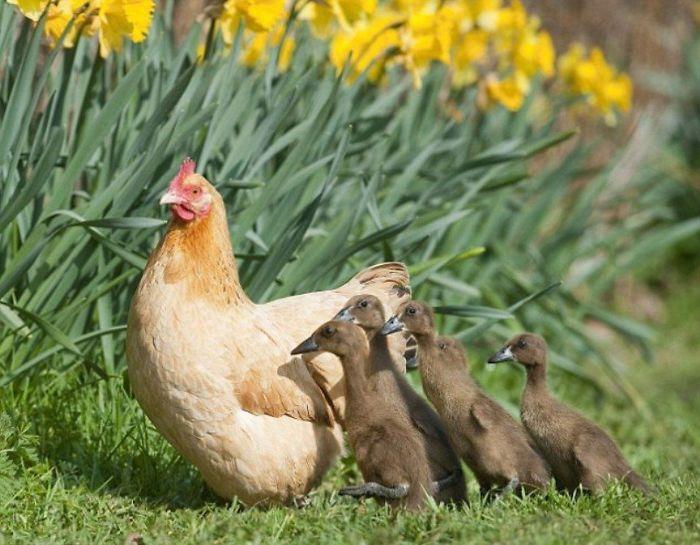 sliepky matky (2)