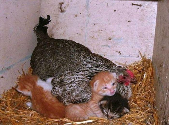 sliepky matky (6)