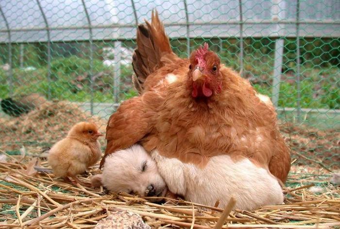 sliepky najlepšie matky (8)