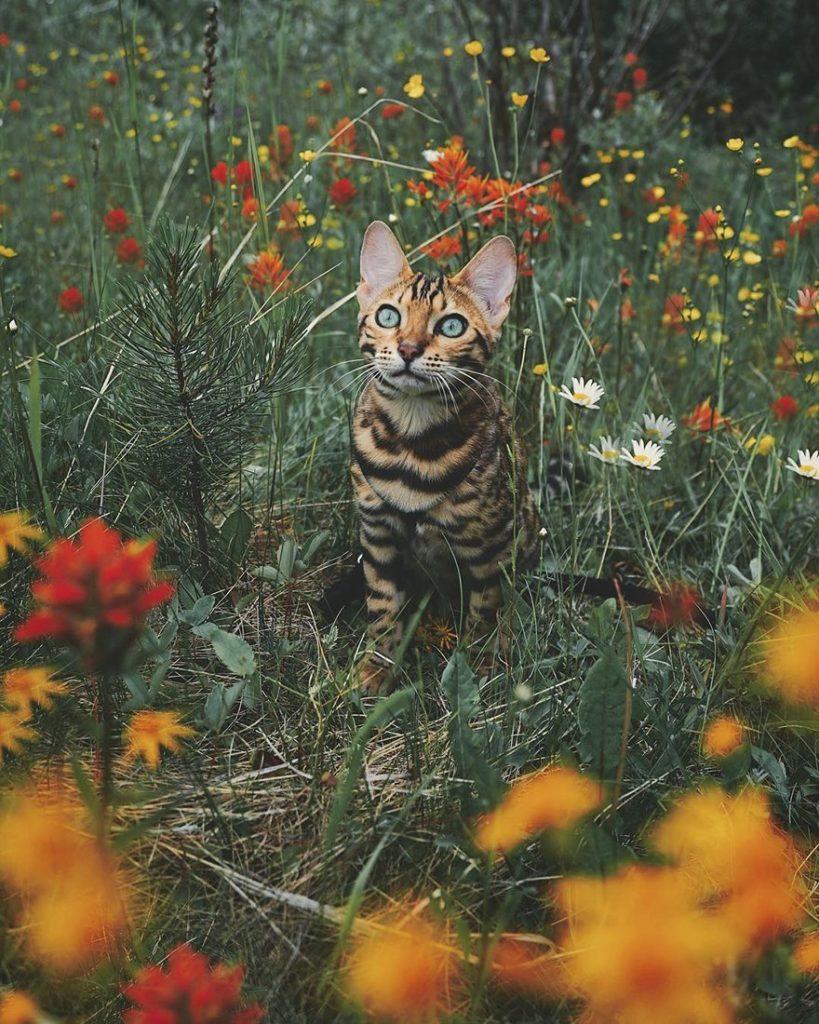 dobrodružstvá mačky (2)