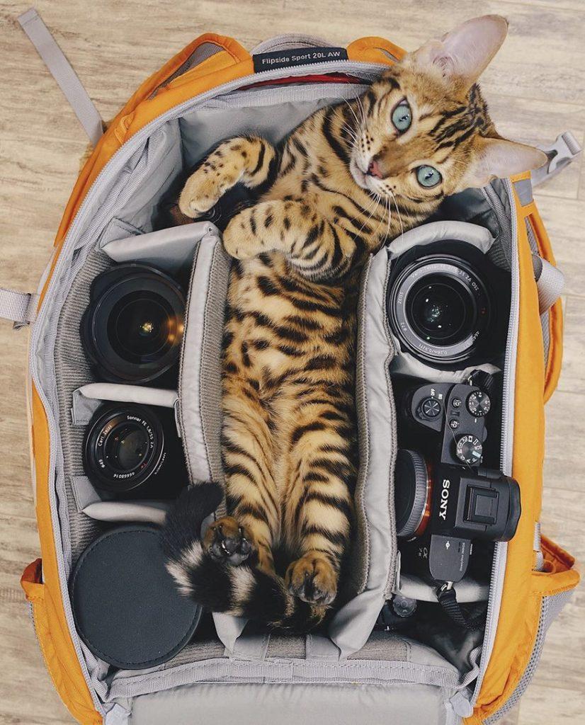 dobrodružstvá mačky (5)