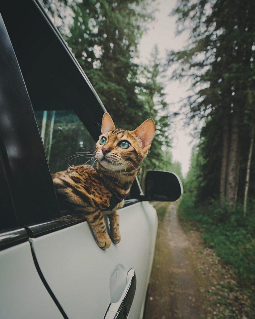 dobrodružstvá mačky (7)