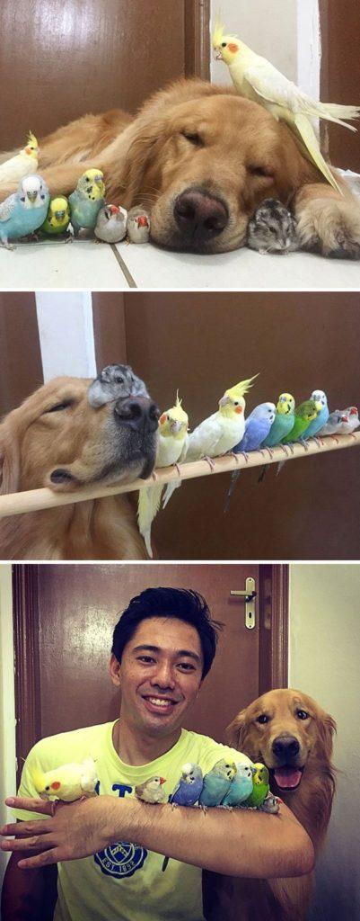 zivot s viacerymi zvieratkami (3)