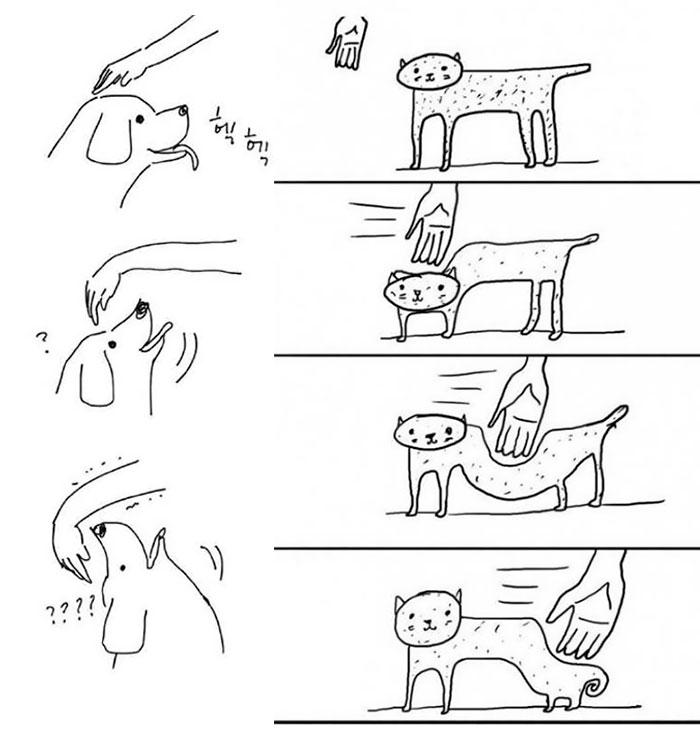 rozdiely medzi mačkami a psami