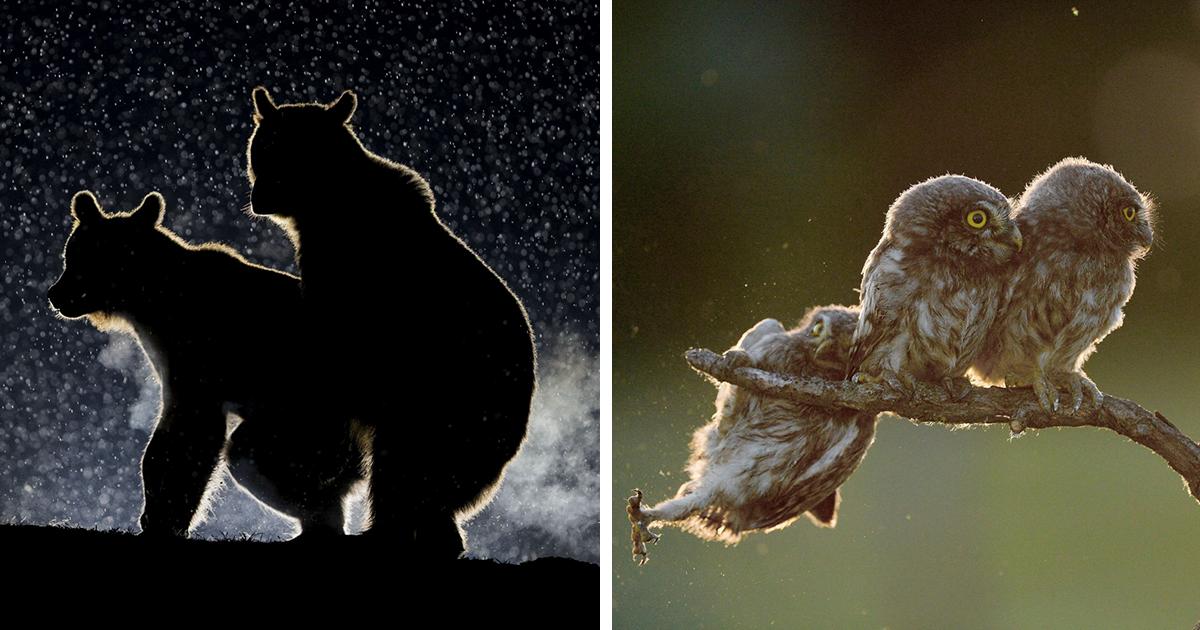 Najvtipnejšie fotky divokej prírody 2017 boli vyhlásené