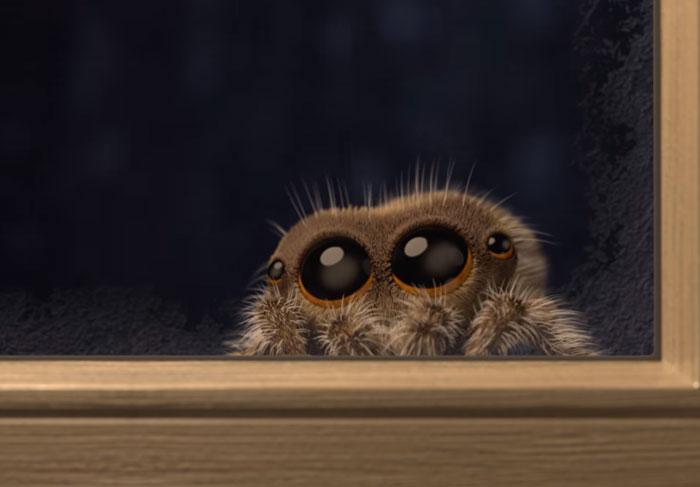 Pavúk Lucas