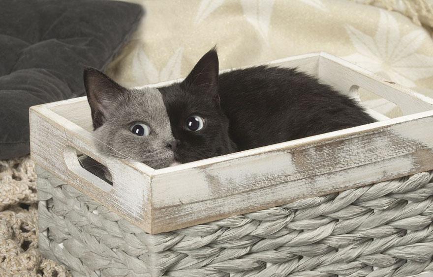 mačka dvoch tvárí