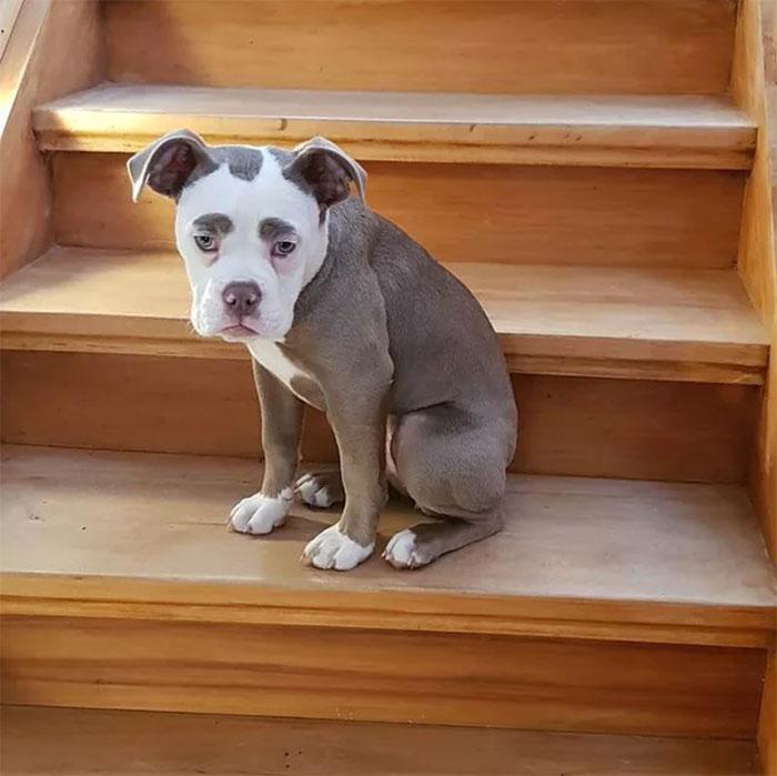 najsmutnejší pes