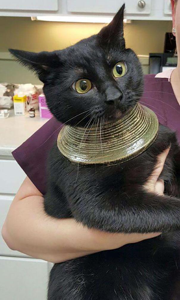 hlúpe mačky