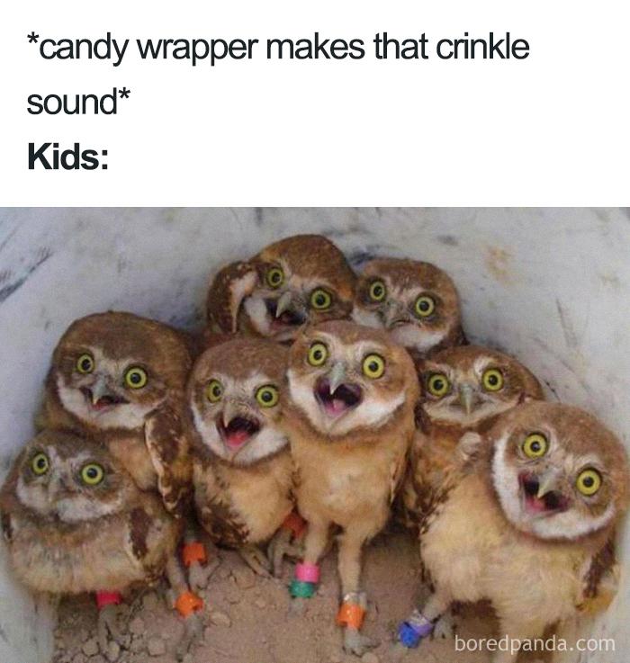 meme od mamiek