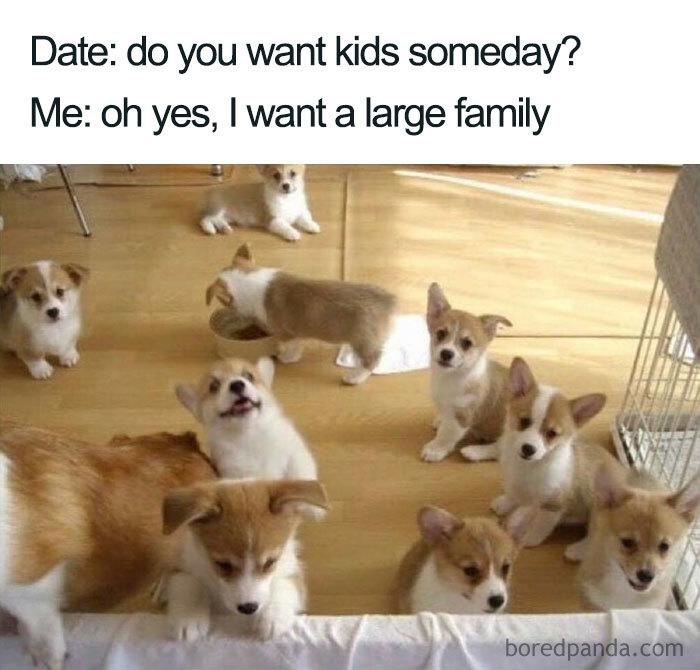 pes alebo mačka miesto detí