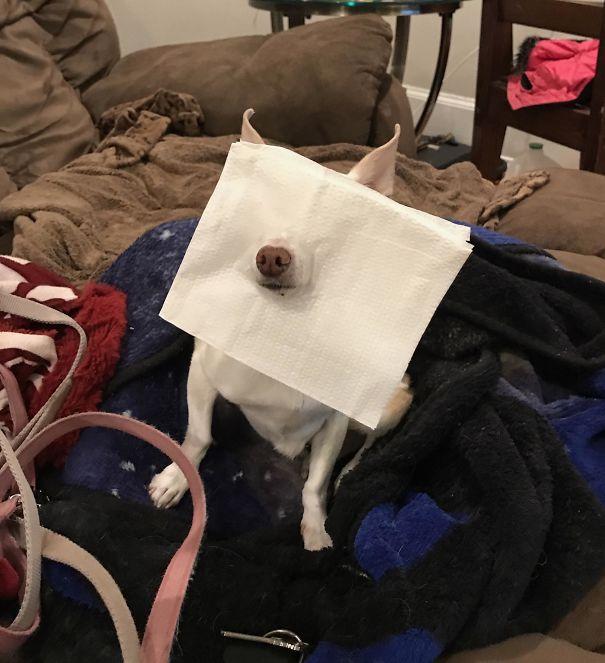 čudný pes