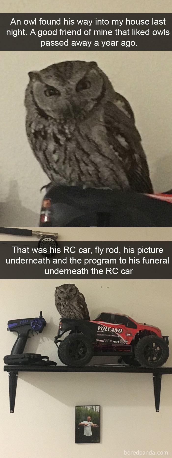 vtipné vtáky