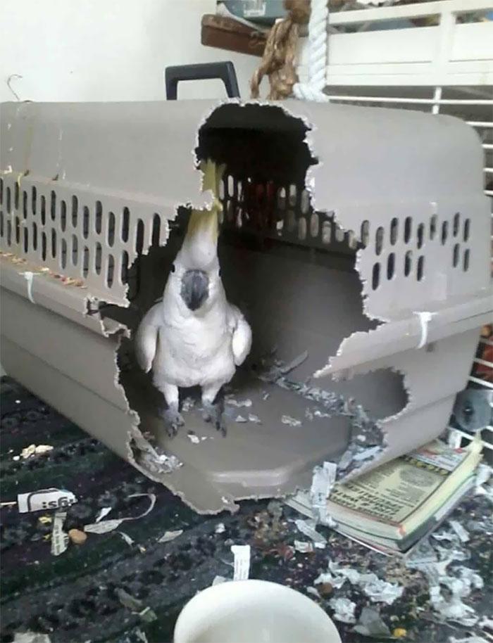 vtáci kreténi
