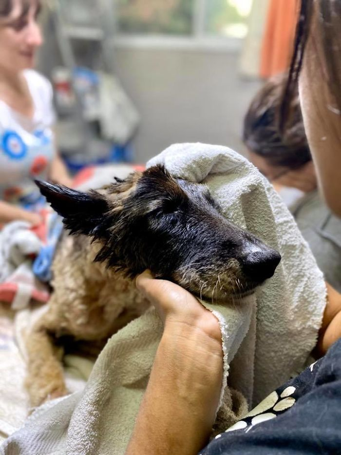 pes pokrytý smolou
