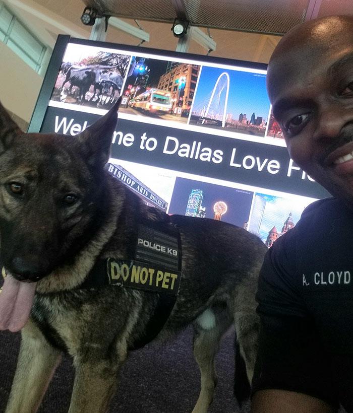 pes v službe