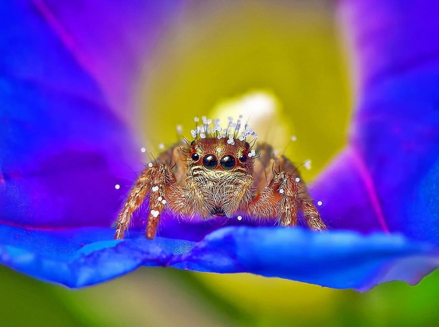 druhy hmyzu