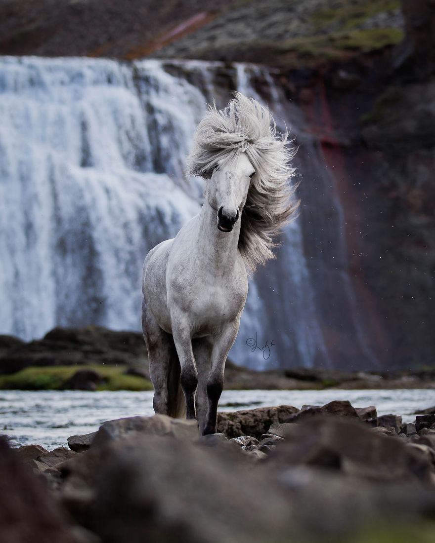 krása divokých koní