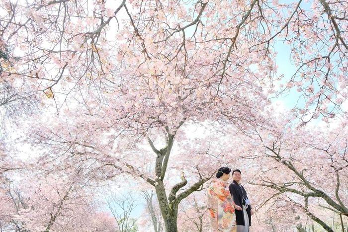 japonský nara park