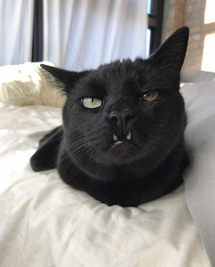 mačičky a ich zúbky