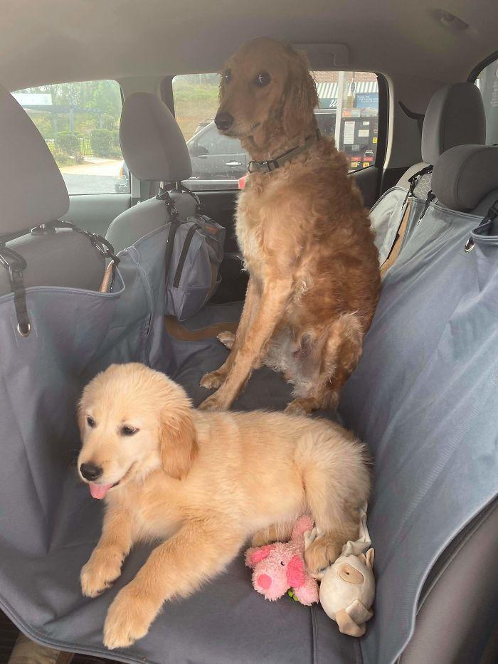 psíky a súrodenci