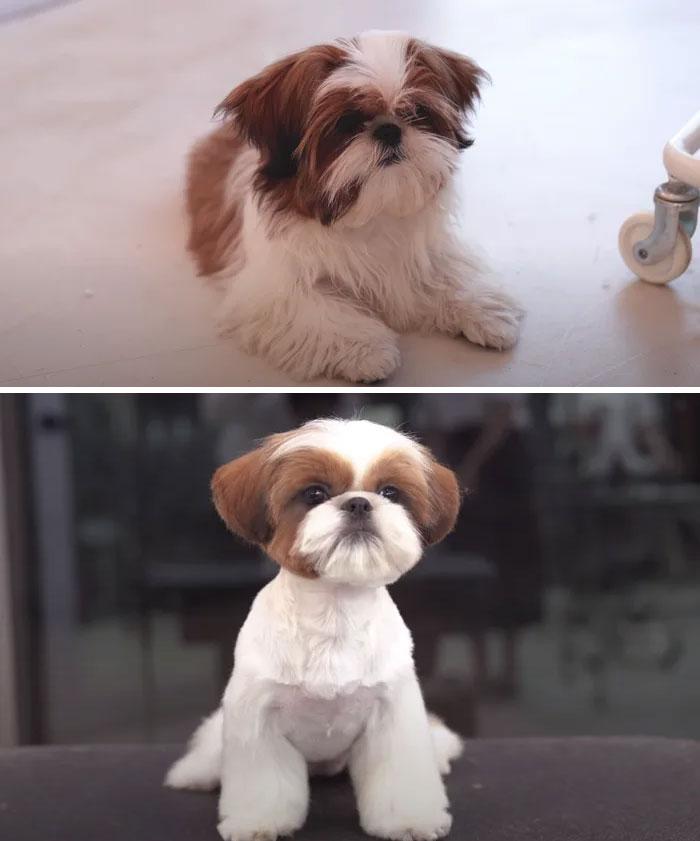 psí kaderník