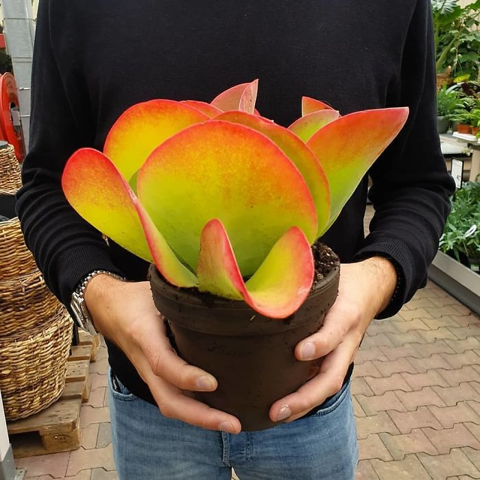 okrasné rastliny