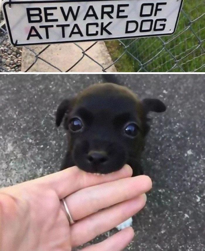 smiešne psíky