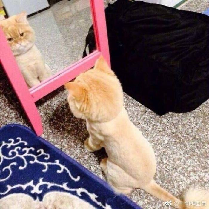 zvieratká a zrkadlo