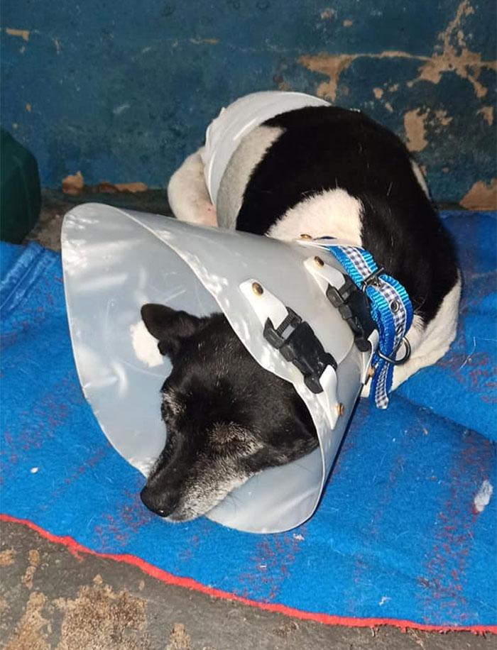 psík s nádorom
