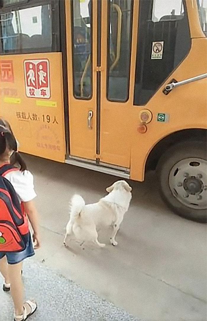 psia oddanosť