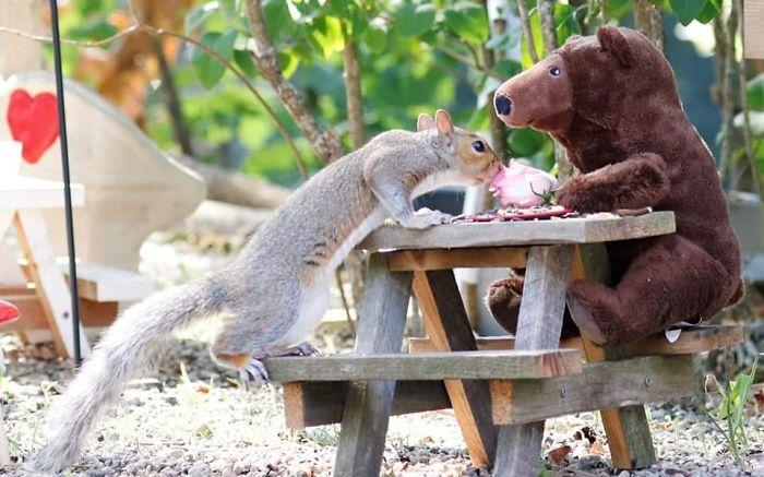 kaviareň pre veveričky