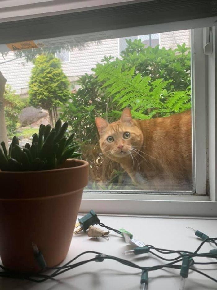 stretnutia s mačičkami