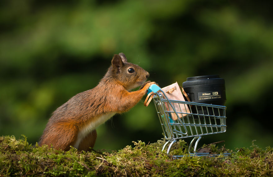 veveričky