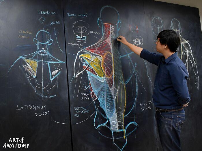 hodiny anatómie