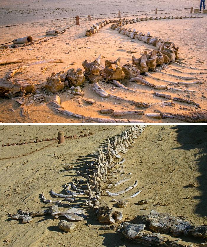 zachované staroveké fosílie