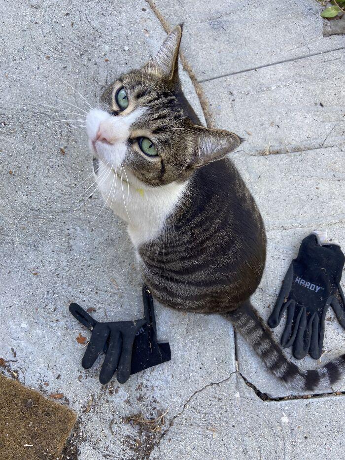 mačka kleptomanka
