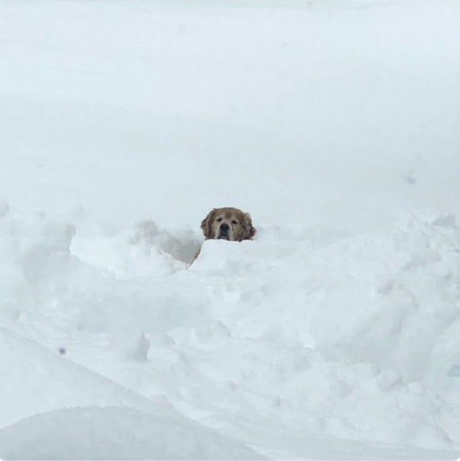 pol metra snehu