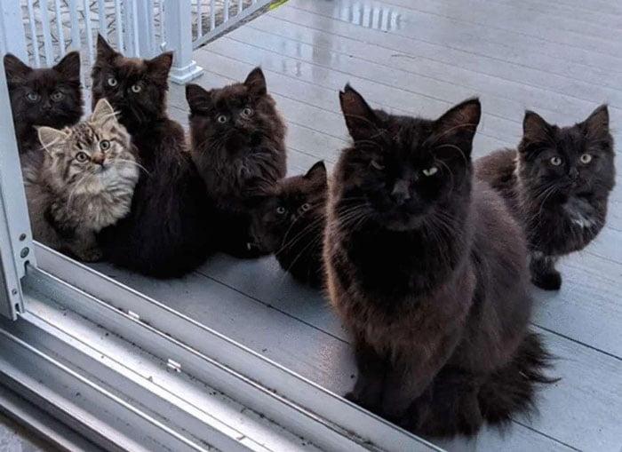 túlavé mačky