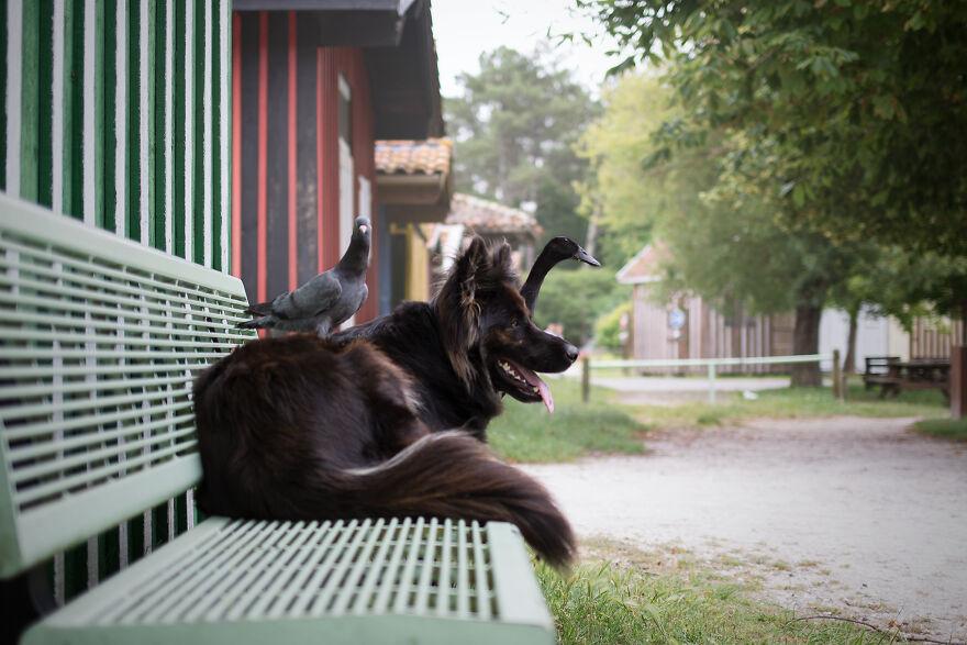 priateľstvo psíka a vtáčikov