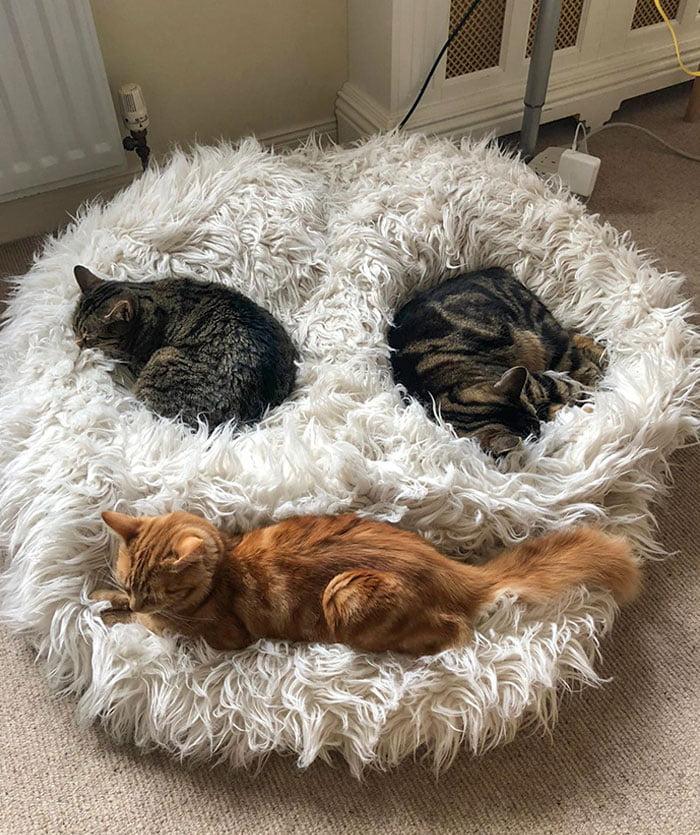 spiace mačky