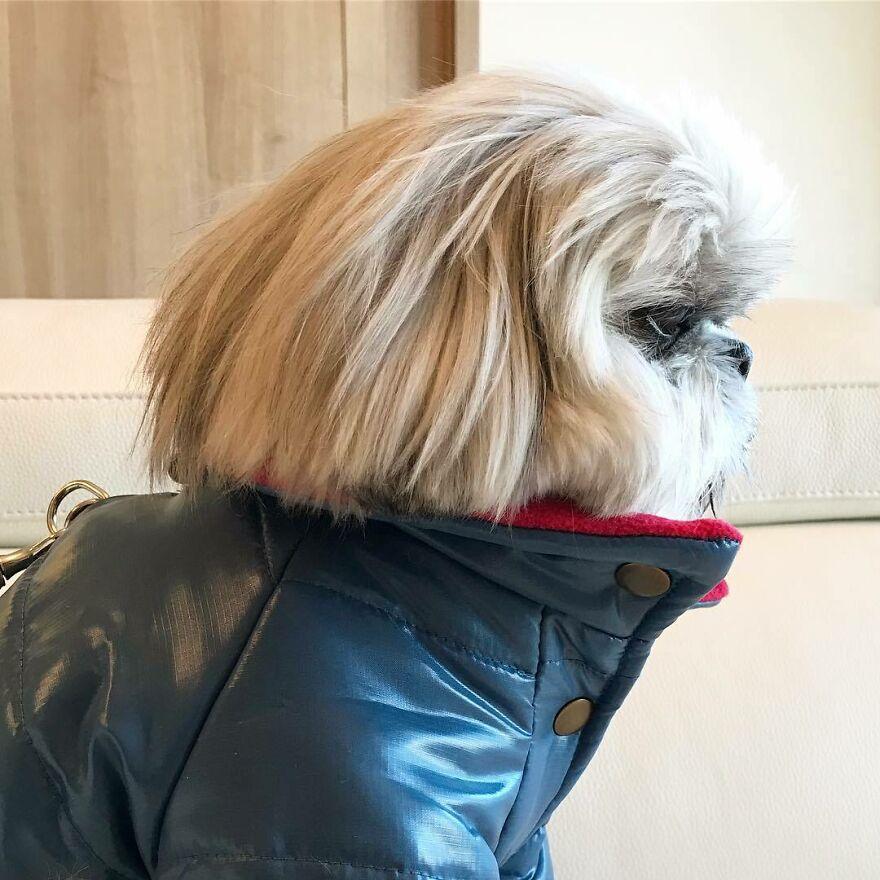 superštýlový psík