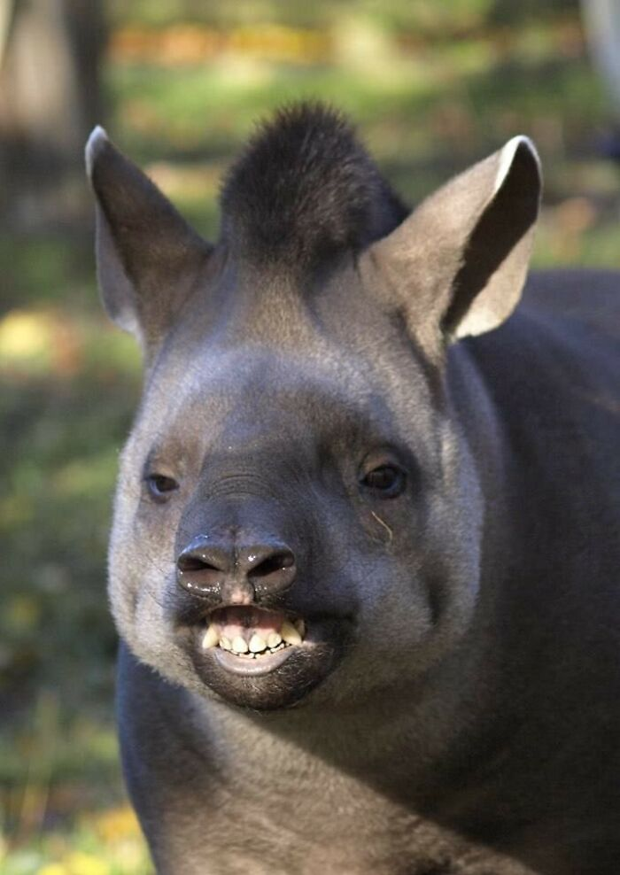 tváre zvierat