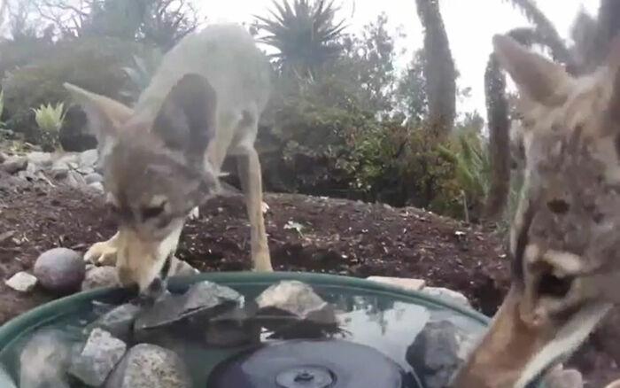 kamera v záhrade