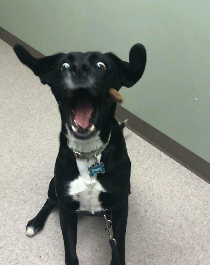 divný pes